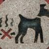 Scoop Dog Poop