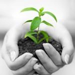 Testing soil is easy