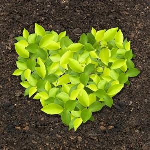 soil testing, fertilizer, grass, lawn care