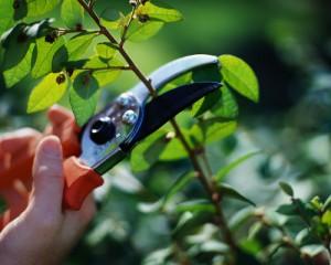 Pruning Hygiene