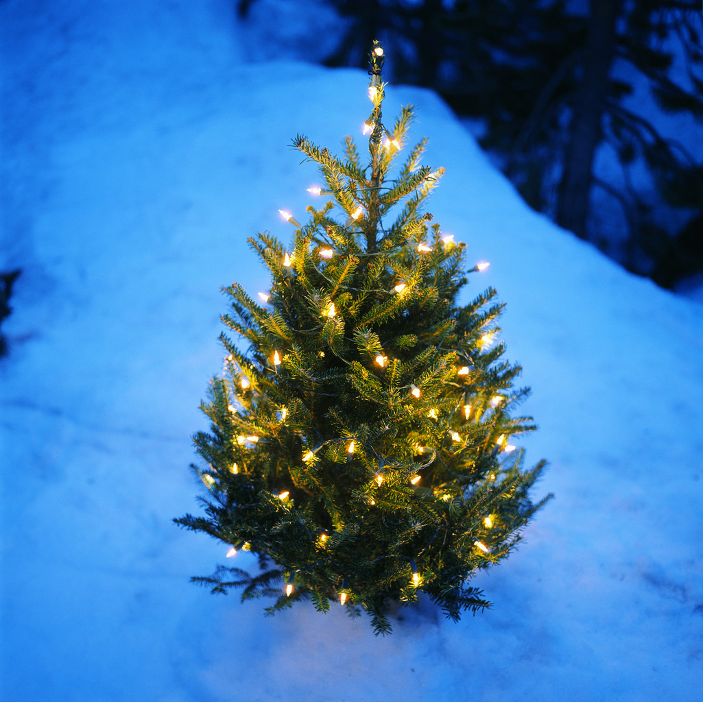 Free Christmas Tree Pick Up Part - 20: York County Will Extend Its Free Christmas Tree Curbside Collection Program  To All County Communities, Including Those That Do Not Subscribe To The  Countyu0027s ...