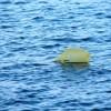 plastic-pollution-1327947-m