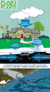 Stormwater-Runoff-Graphic