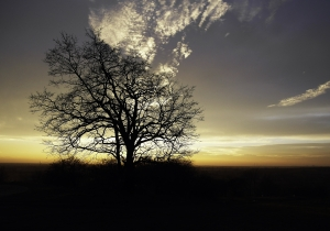 sunrise-tree-1442778-m