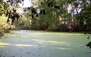Algae Wet Pond