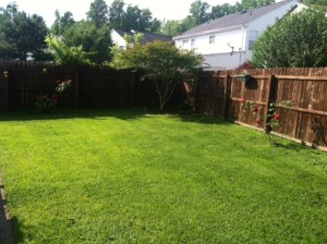 No fertilizer was used in the greening of this yard!