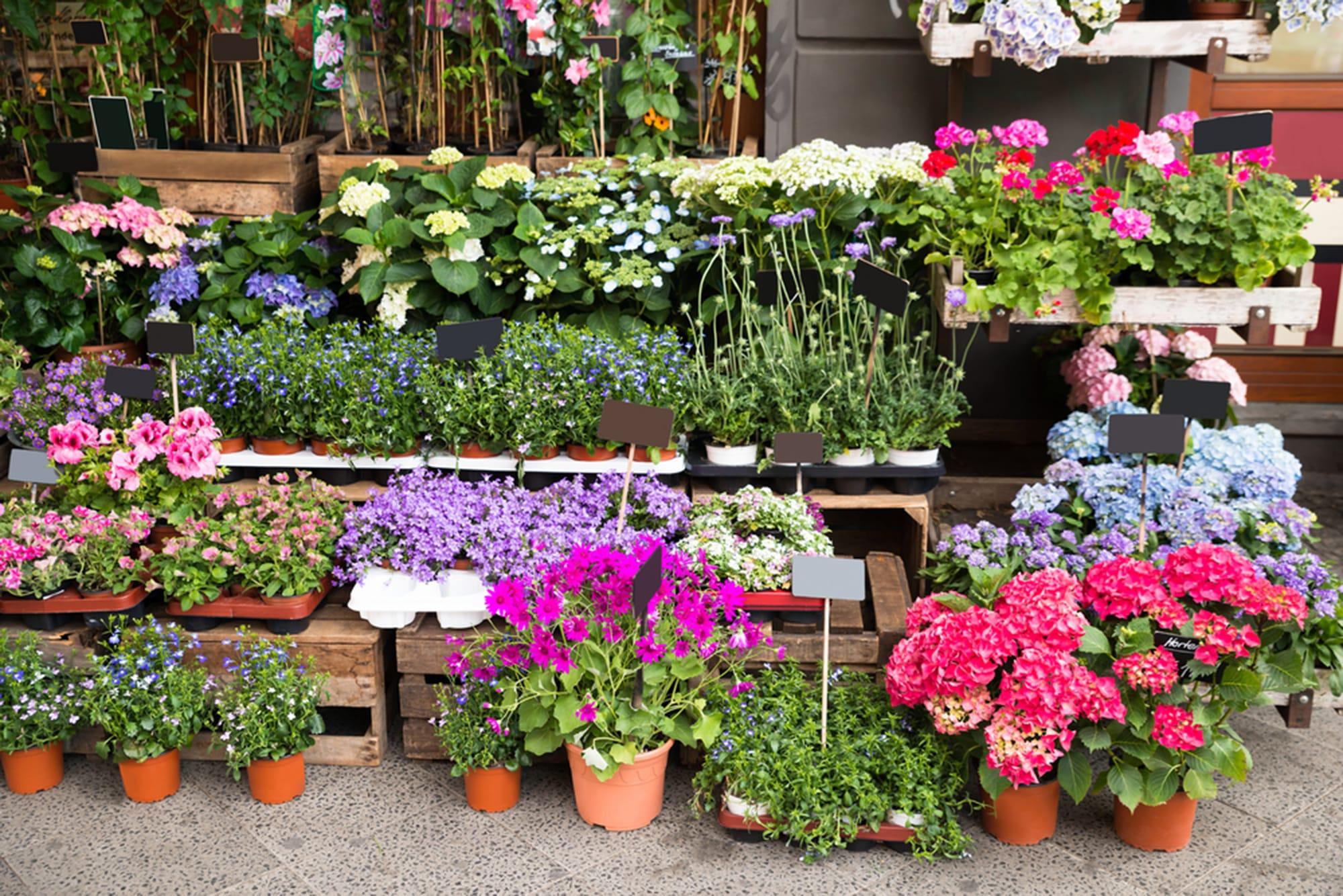 Norfolk Botanical Garden Plant Sale - AskHRGreen