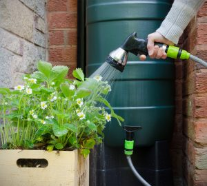 person waters plants with hose attached to rain barrel