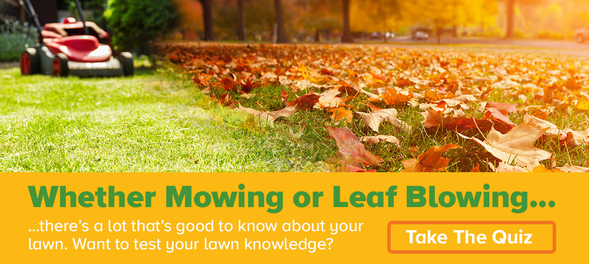 Take the lawn care quiz