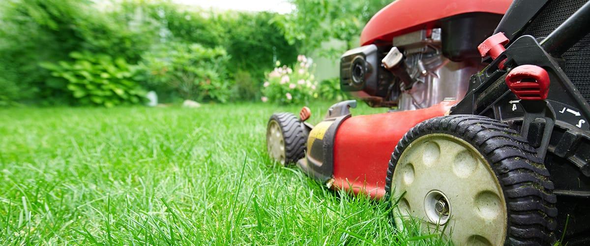 lawn care  service provider questions