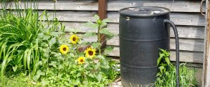 rain barrel on the side of rustic building