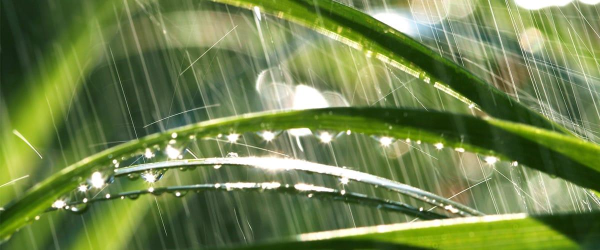 Rain Gardens Askhrgreen
