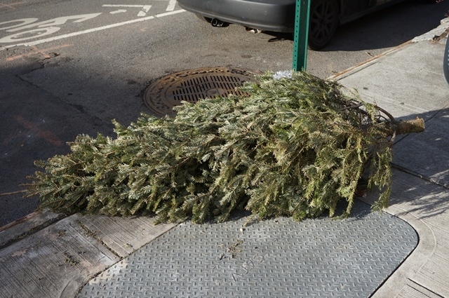 Christmas Recycling 2020 2020 Christmas Tree Recycling Schedule   AskHRGreen
